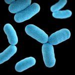 Biología molecular: definición y aplicaciones