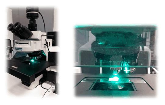 3 5 Caracterización de las propiedades antibiofilm en superficies