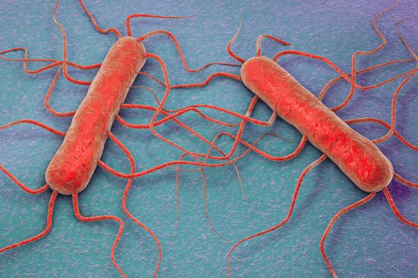 Prevenir y controlar la listeria en la producción de alimentos
